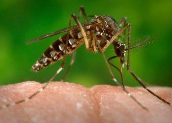 SP tem primeira suspeita de microcefalia por zika vírus