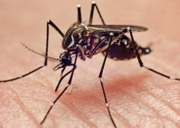 Saúde na escola mobiliza 18 milhões de estudantes no combate ao Aedes aegypti