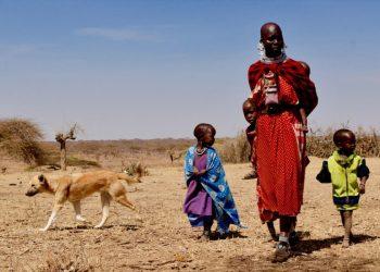 Clínicas direcionadas a humanos e animais podem reduzir custos